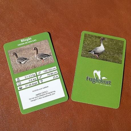 Fuglekort